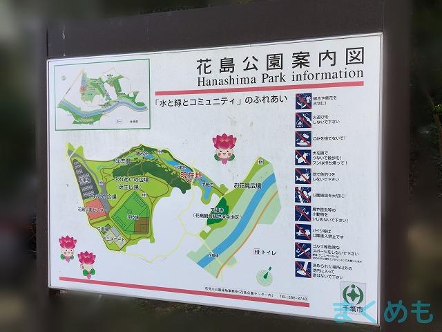 体育館 花島
